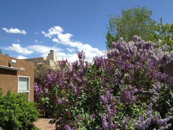 Spring in Albuquerque